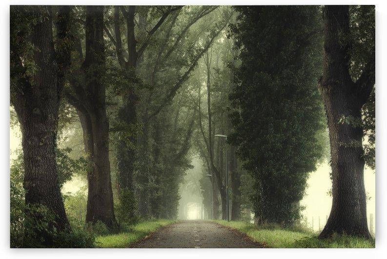 Tunnel of inner calmness by Janek Sedlar