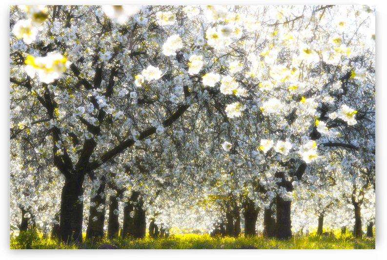 Velvet spring by Janek Sedlar