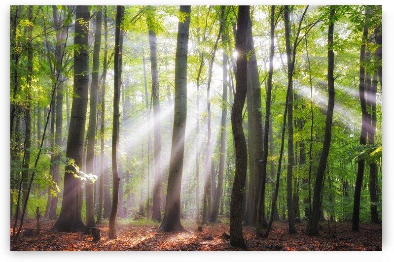 When the sun shine on your way by Janek Sedlar