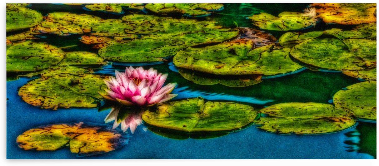 Secret Pond by Michel Nadeau