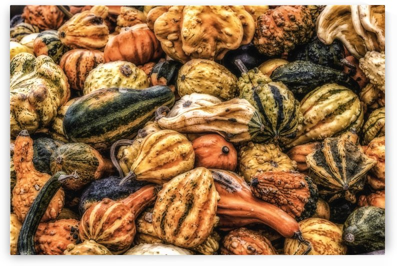 Fall Harvest by Michel Nadeau