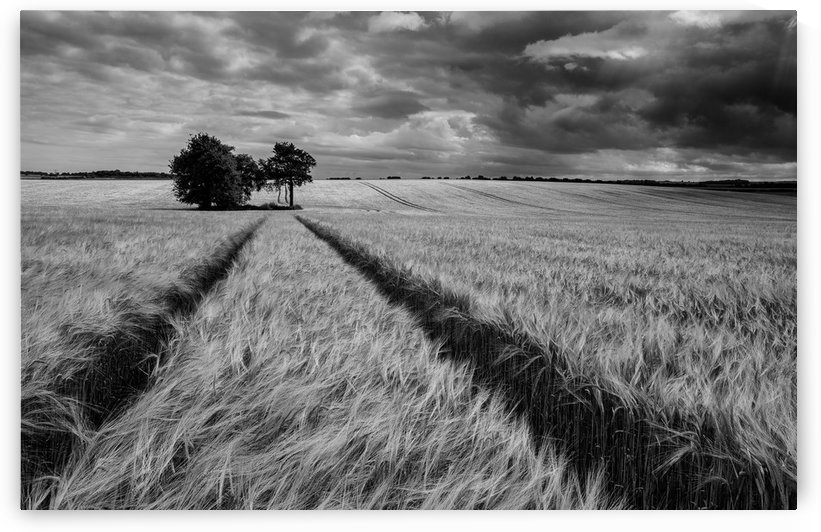 Field Shapes 2 by Keith Truman