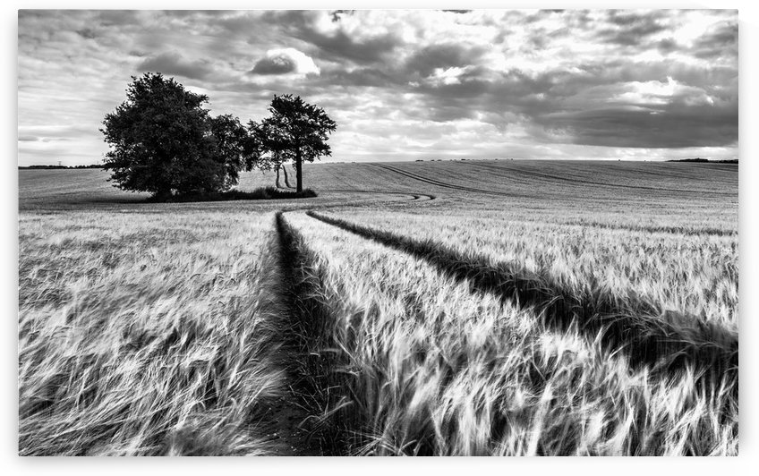 Field Shapes by Keith Truman