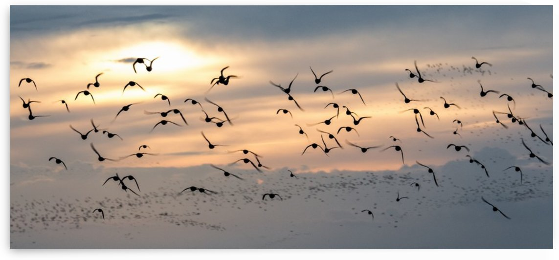 Coming home to roost by Keith Truman