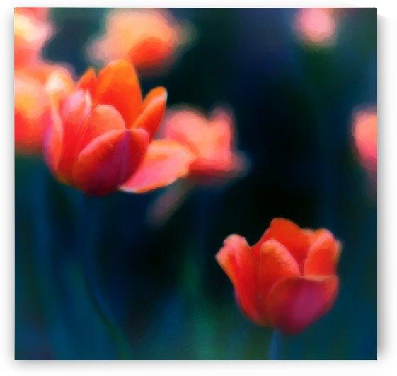 Tulips Mirage by Michel Nadeau