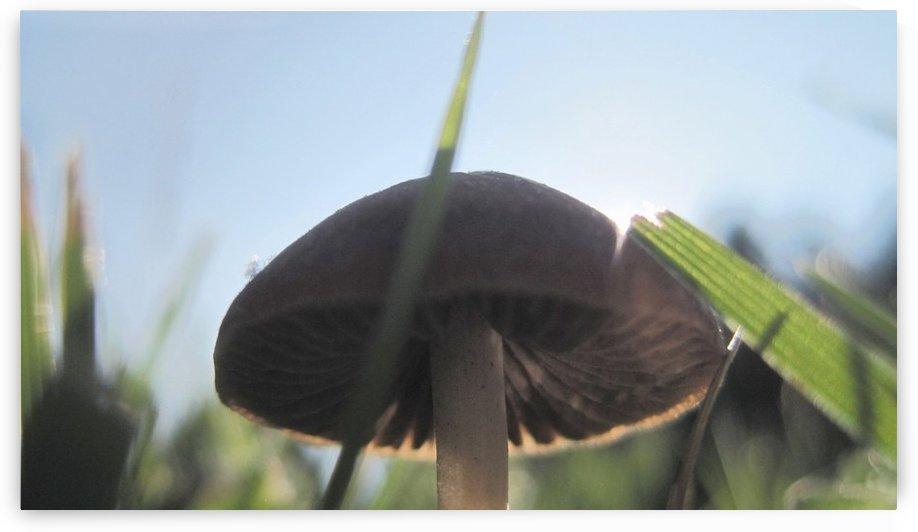 Mushroom Gills by Tammy Shook aka Kelra