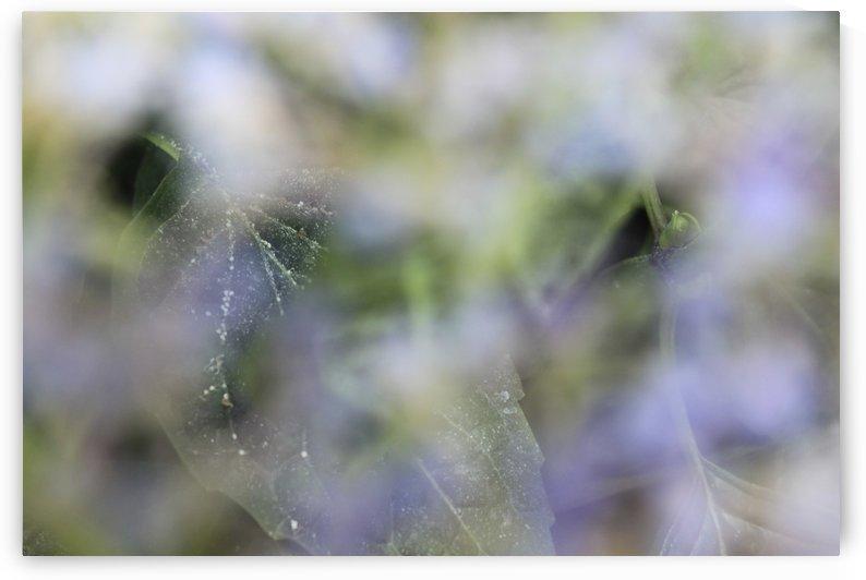 Hiding Leaf by Robert Stewart