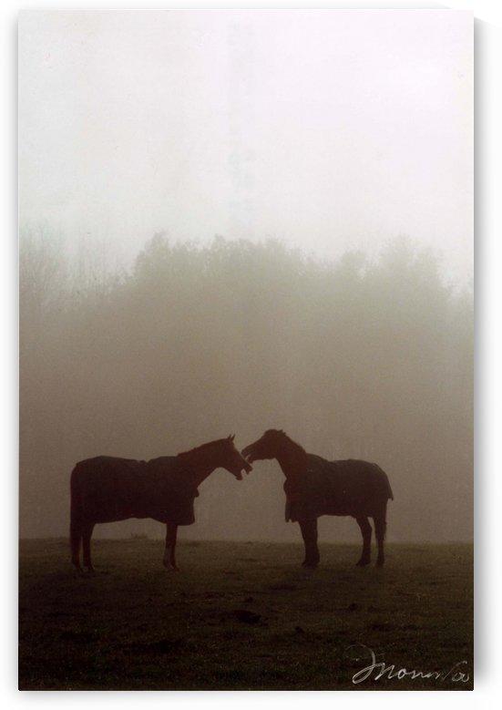 Fog Talkin by Deborah Morrow