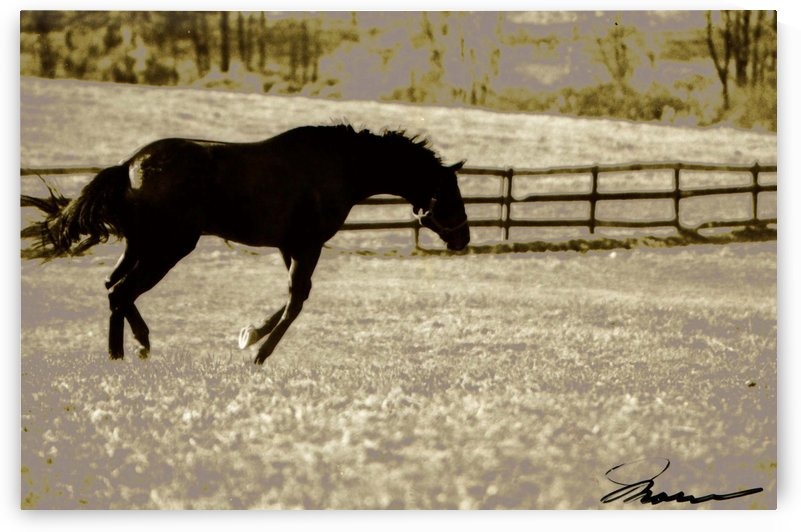 Jumping for Joy by Deborah Morrow