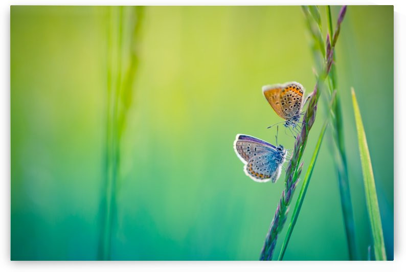 Butterfly summer background by Levente Bodo
