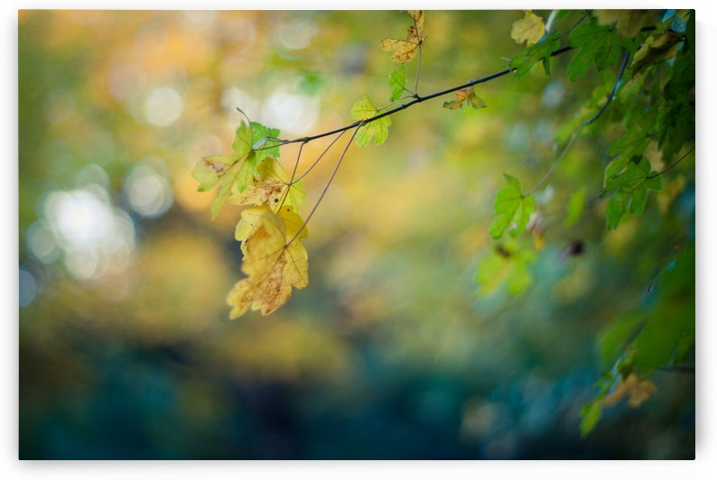 Beautiful autumn background by Levente Bodo
