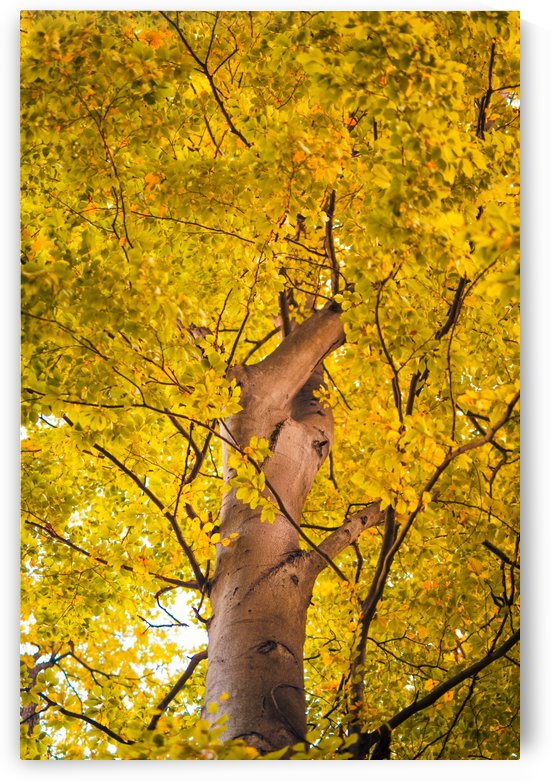 Yellow leaves autumn leaf background by Levente Bodo