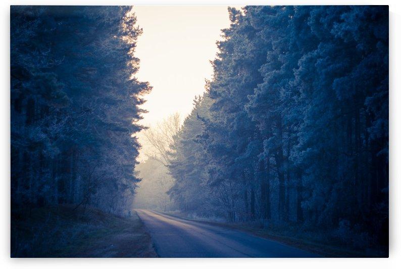 Winter road by Levente Bodo