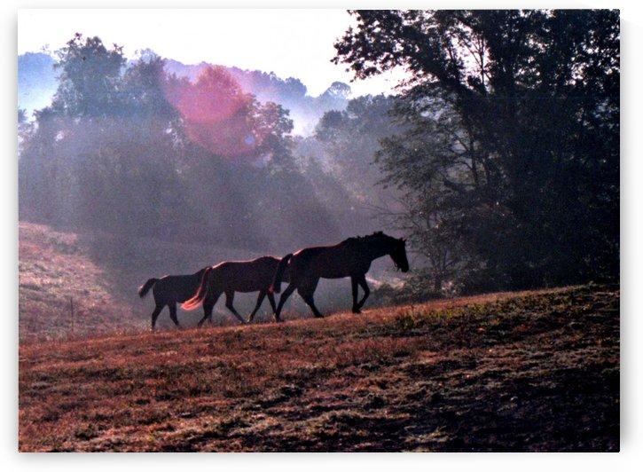 Three Mares Walking by Deborah Morrow