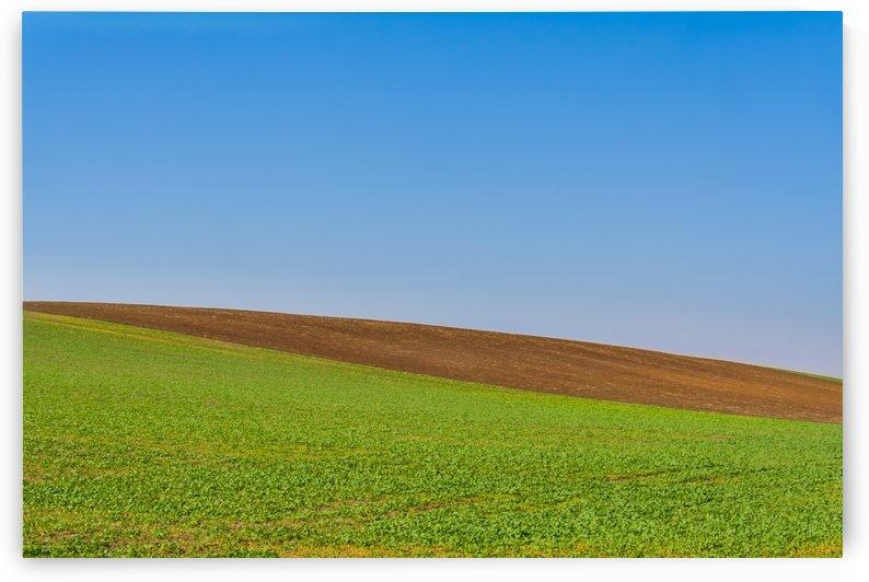 Beatiful morning green field with blue heaven by Levente Bodo