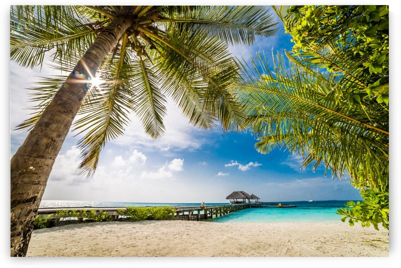 Palm and tropical beach by Levente Bodo