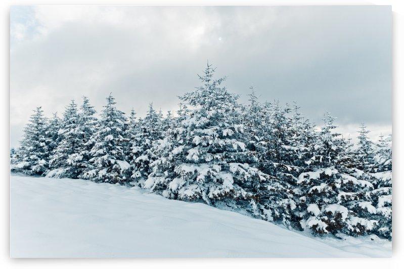 Snow by Fergus Maitland