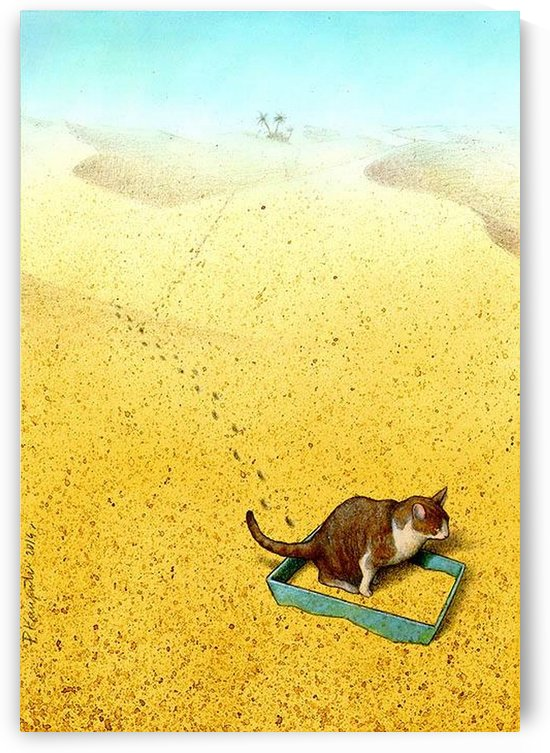 Cat Sandbox by Pawel Kuczynski