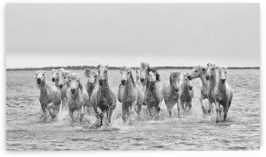 The Splash of Horses by Kathy Cline Photography