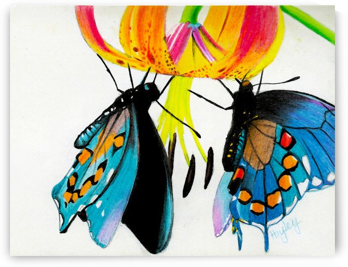Butterflies and Lily by Hayley Boothe