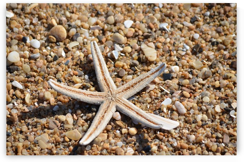 Starfish on the Beach by BK