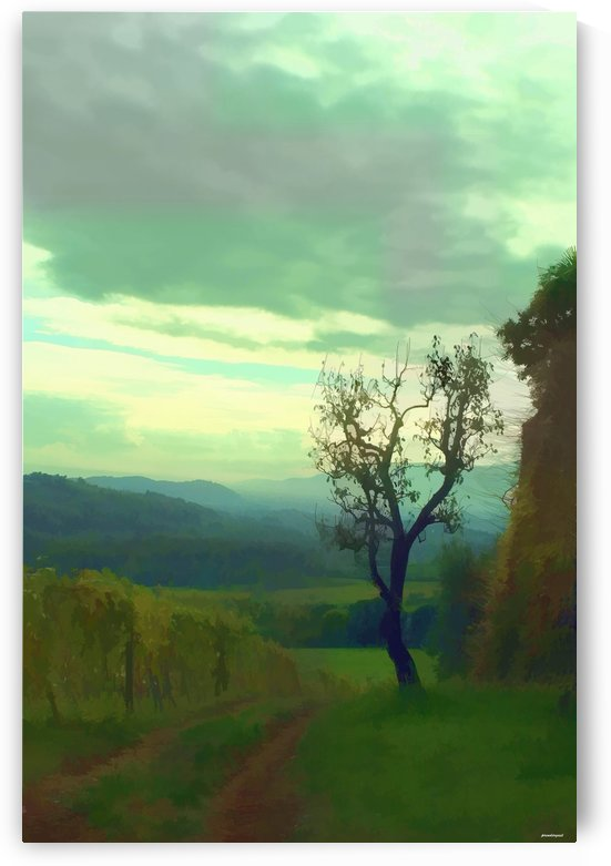 tuscany vineyard by tom Prendergast