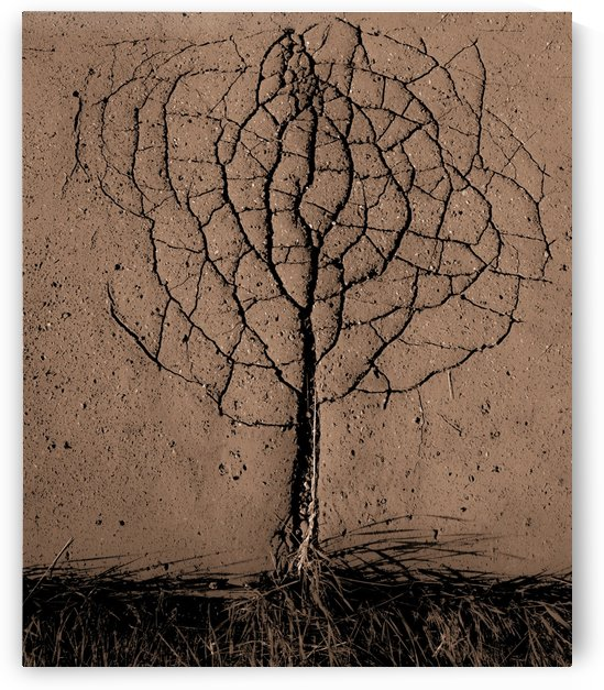 Asphalt tree by 1x