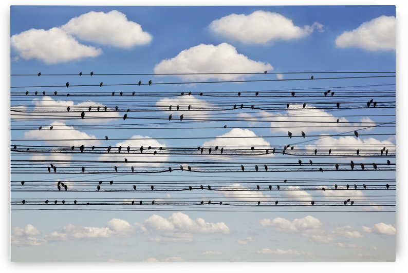 Cantus Arcticus - Concerto for Birds by 1x