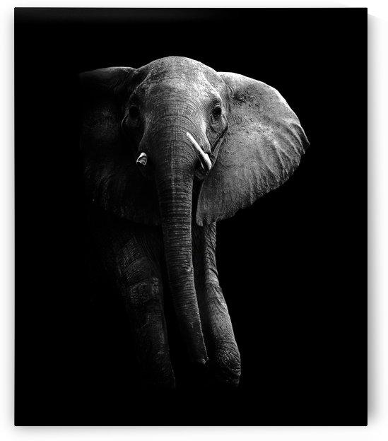 Elephant! by 1x