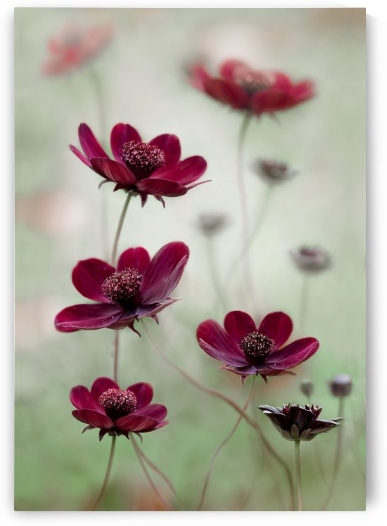 Cosmos sway by 1x
