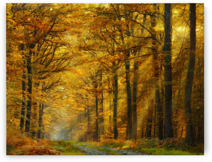 Enchanted Forest by 1x