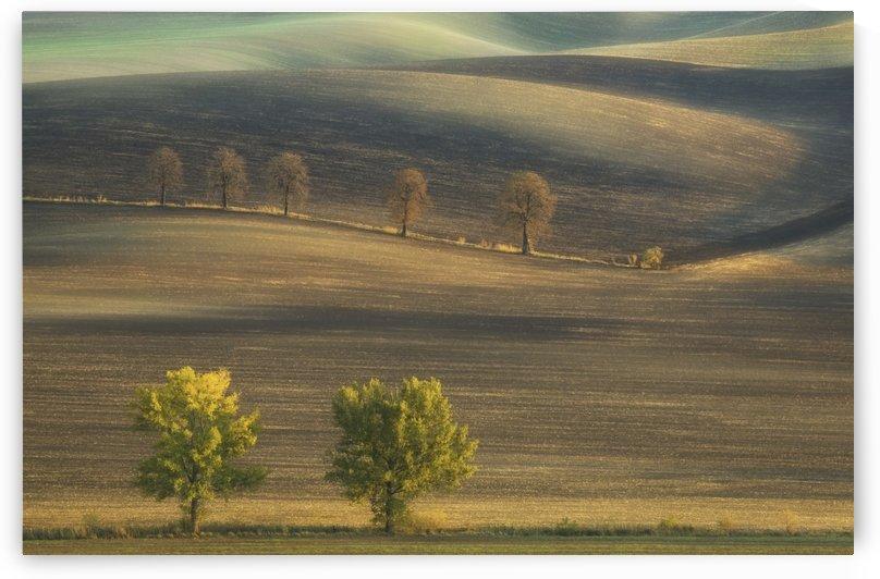 Fields... by 1x