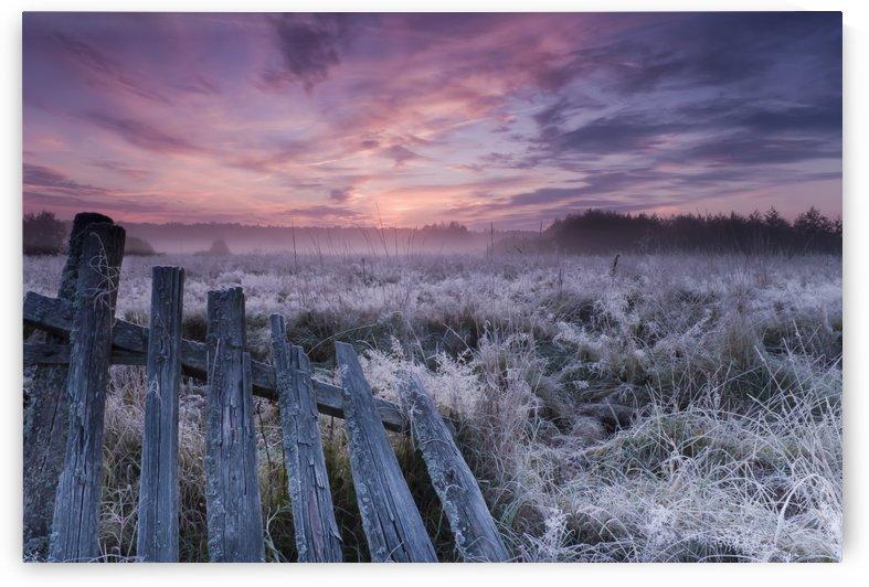 Dawn of Bialowieza Meadows by 1x