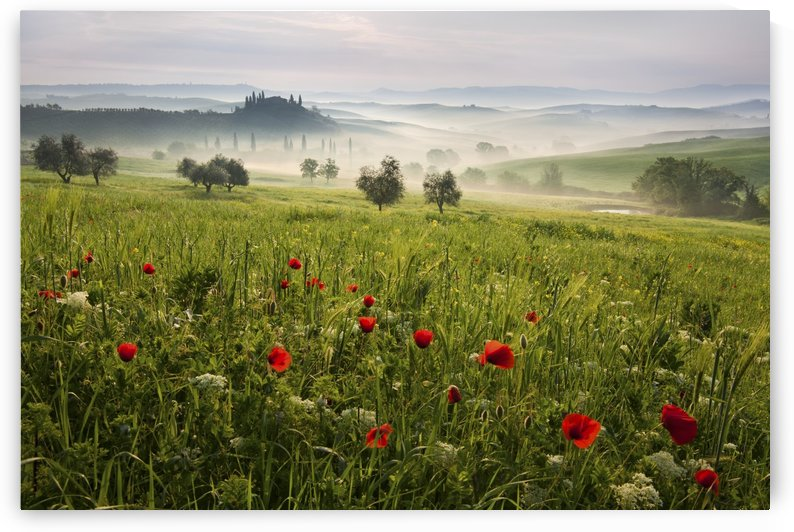 Tuscan spring by 1x
