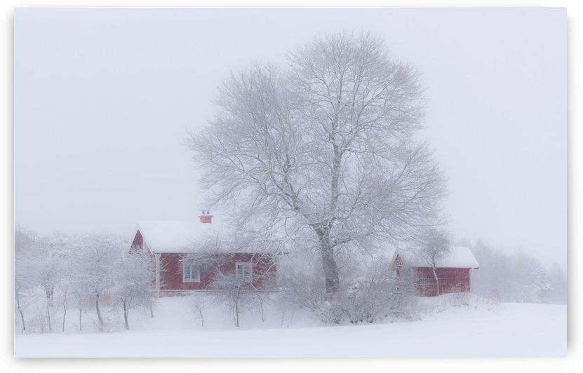 Winter idyll by 1x