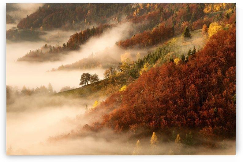 November's fog by 1x