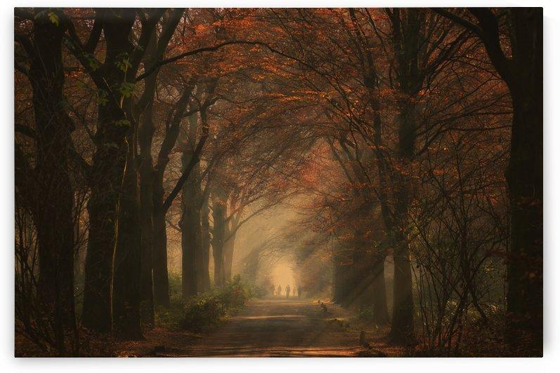 Autumn walk by 1x