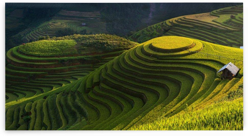 Gold rice terrace in mu cang chai,Vietnam. by 1x