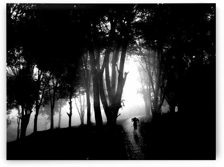 Misty Hillside by 1x