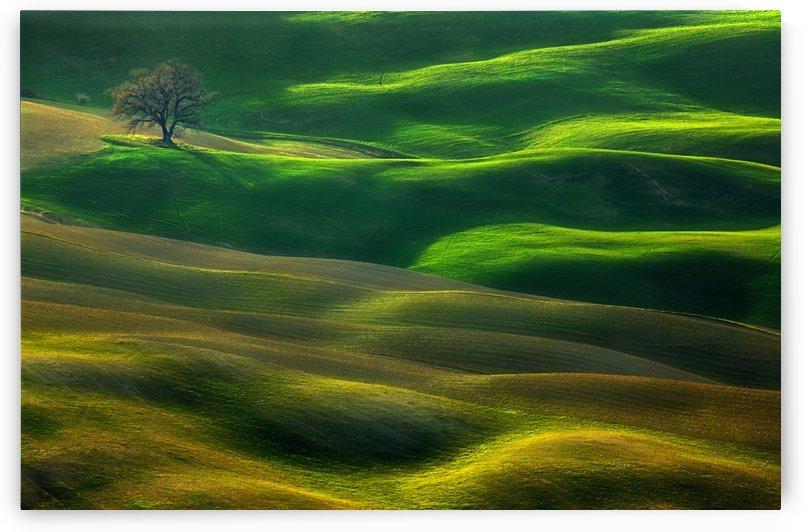 Oak... by 1x