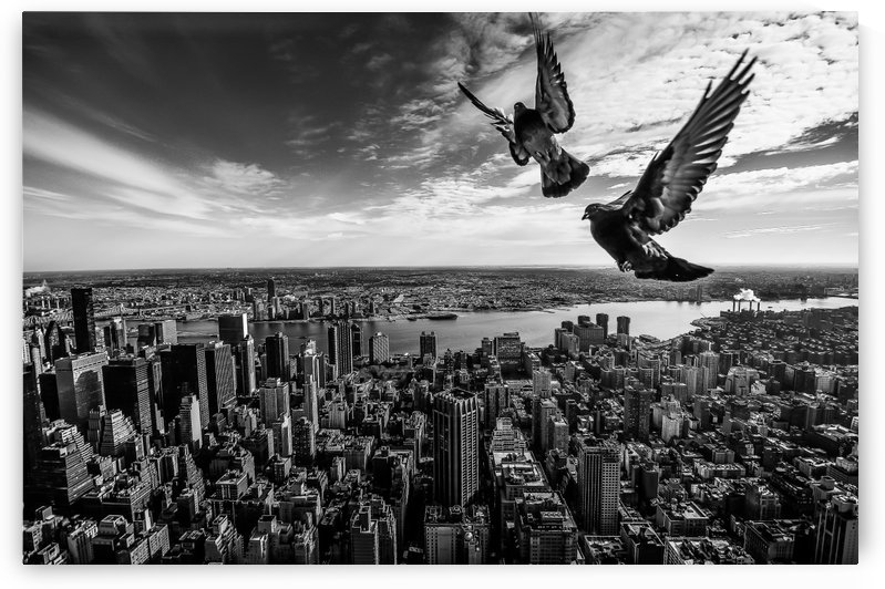 Pigeons on the Empire State Building by 1x