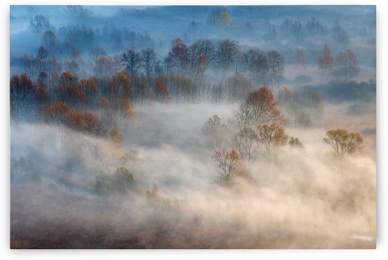 Trees in the early morning fog by 1x
