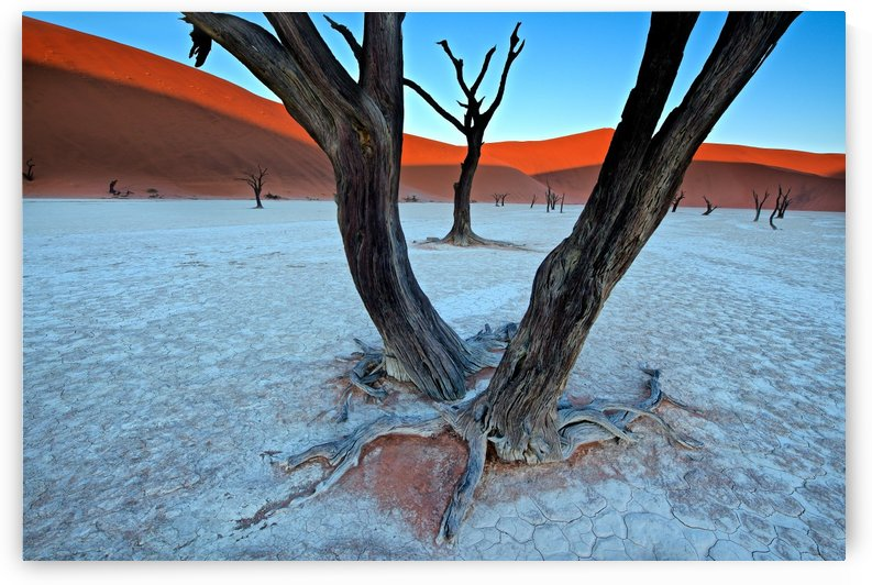 Ancient trees in the Vlei by 1x