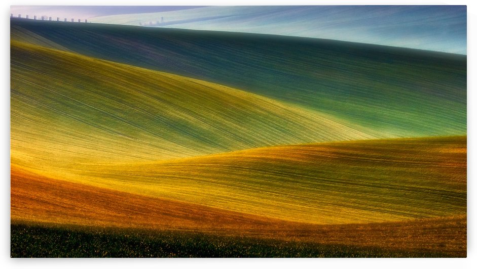 Spring fields by 1x
