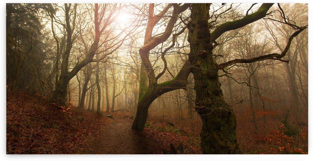 My autumn walk.. by 1x
