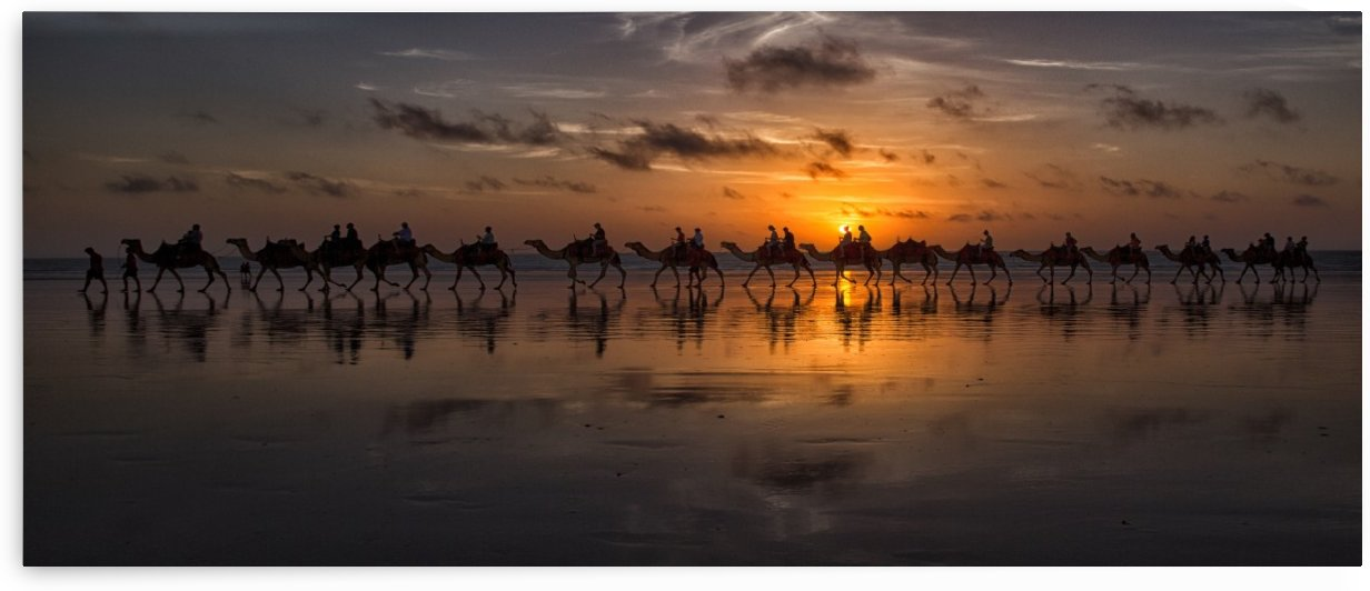 Sunset Camel Safari by 1x