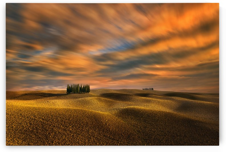 Cypresses... by 1x