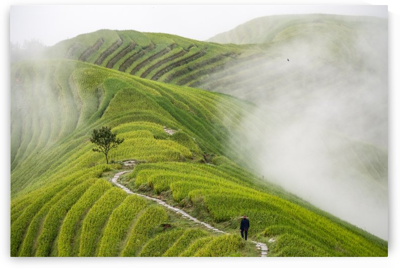 Ping'an rice terraces by 1x
