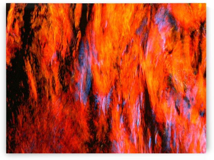 Elephant Orange by Robert Heckerl