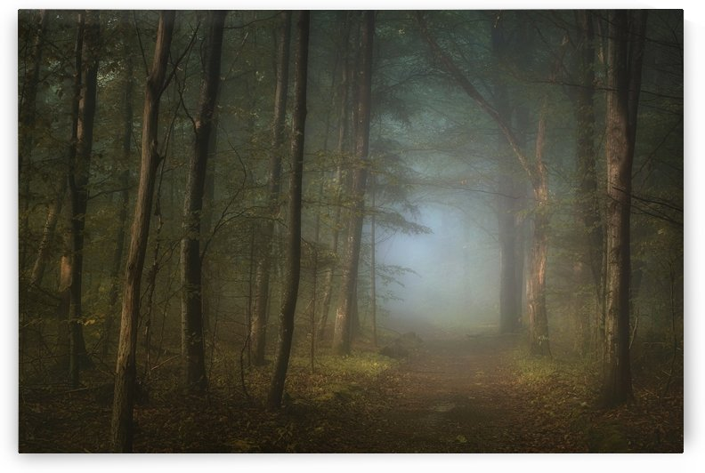 forest pathway by 1x
